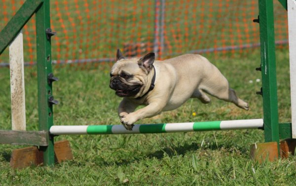Online Dog Training Courses and Classes