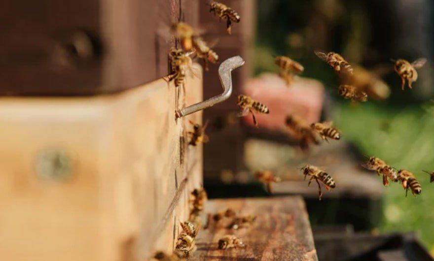 Beekeeping easy over 50 hobbies
