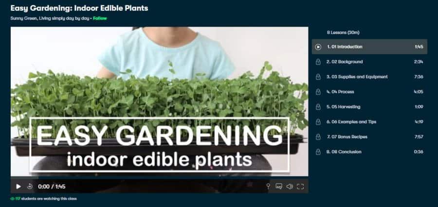 Easy Gardening: Indoor Edible Plants