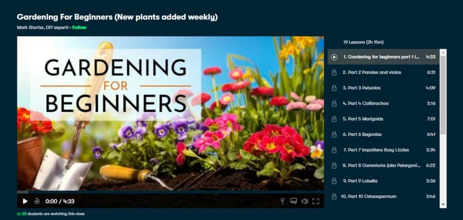 Gardening For Beginners (New plants added weekly)