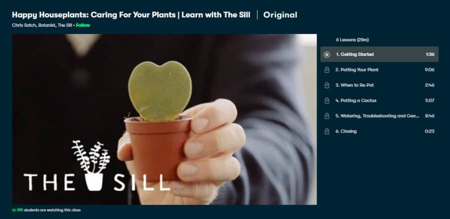 Happy Houseplants: Caring For Your Plants | Learn with The Sill